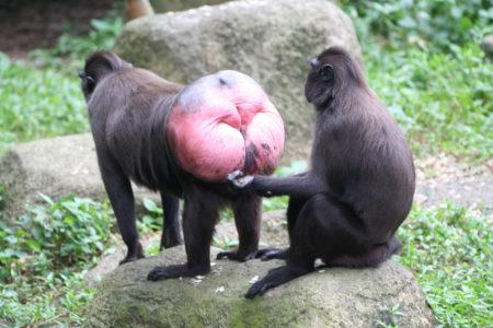 buco di scimmia
